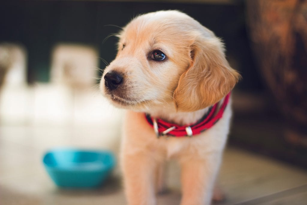 How To Keep Your House Clean With Dogs Through Grooming