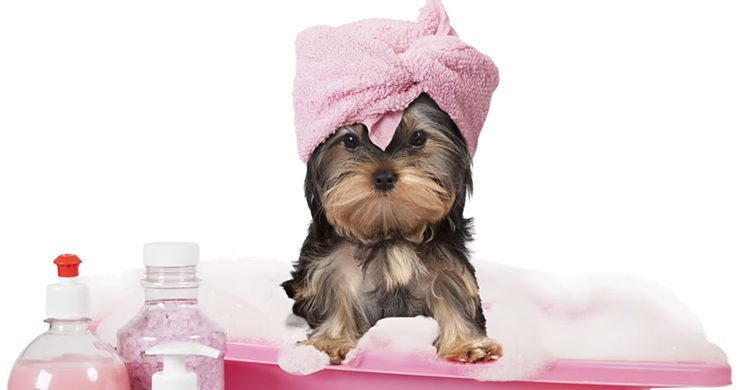drying your dog after bath