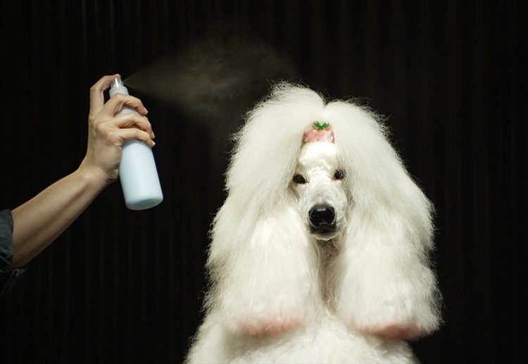 tips to dry dog hair