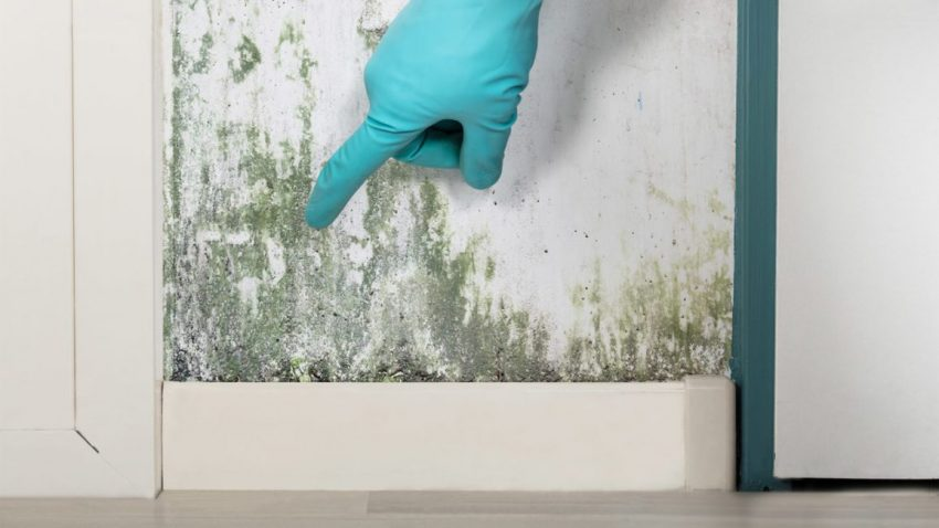 different types of mold
