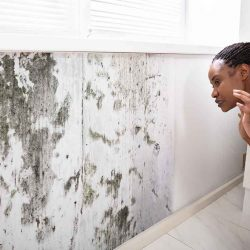 getting rid of mold off walls
