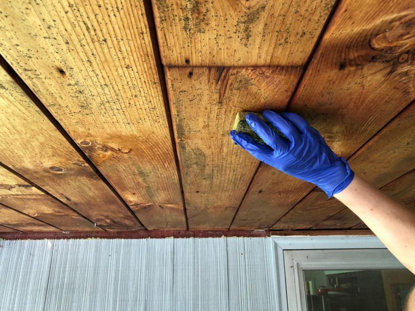 Getting rid of mold on wood
